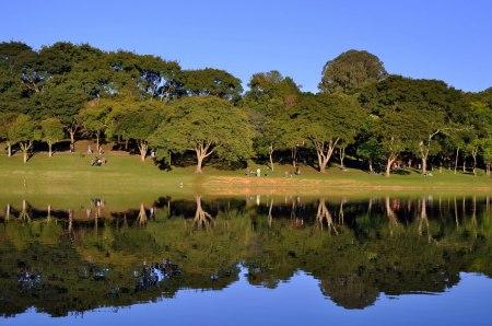 A natureza do Parque São Lourenço