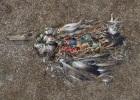ocean-gyre-albatross-ocean-gyre-birds-pictures3