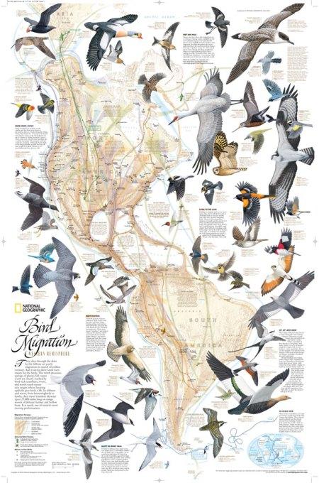 Bird_Americas_T-Nat geographic
